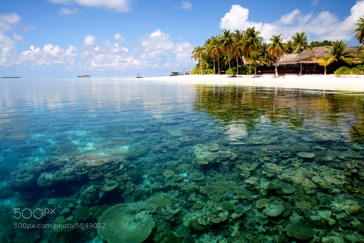 Photograph Coral Garden by Mohamed Shareef on 500px