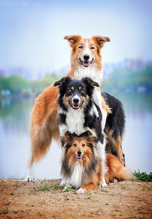 Photograph Dog pyramid by Ksenia Raykova on 500px