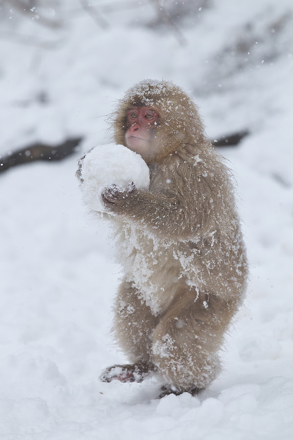 Carrying the Snowball by Masashi Mochida on 500px.com