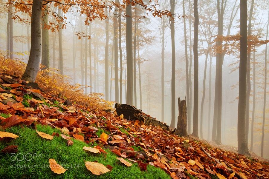 Photograph Autumn forest 3 by Daniel Řeřicha on 500px