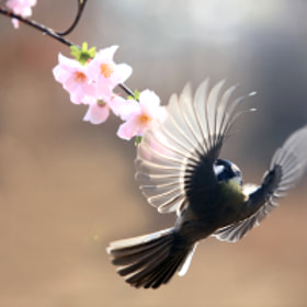 great tit by Na giseong (reonis) on 500px.com