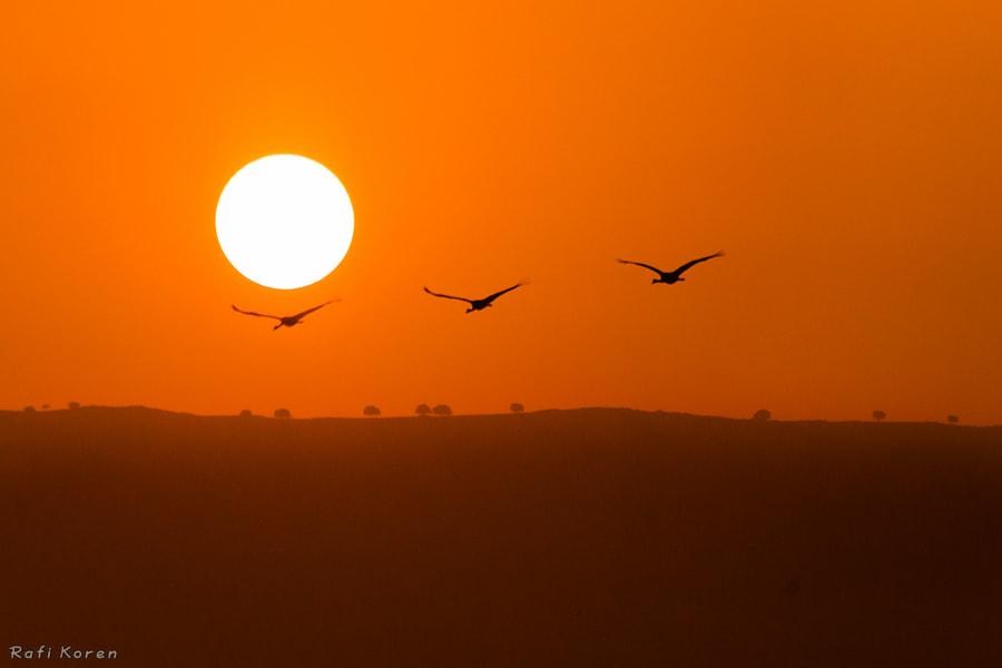 Sunrise trio