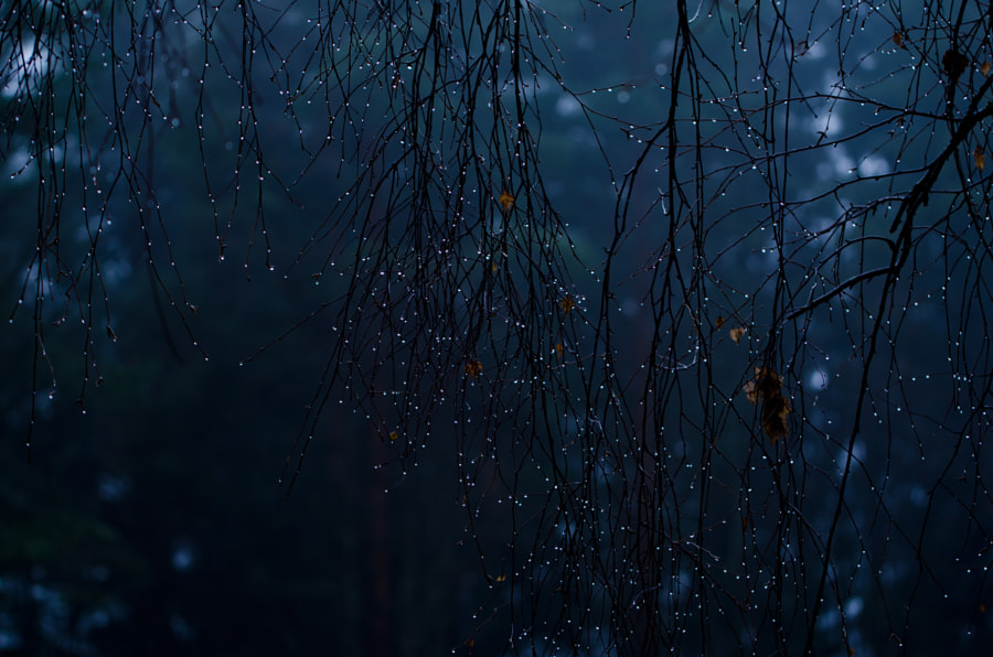 Photograph Tree stars by Christina Ericsson on 500px