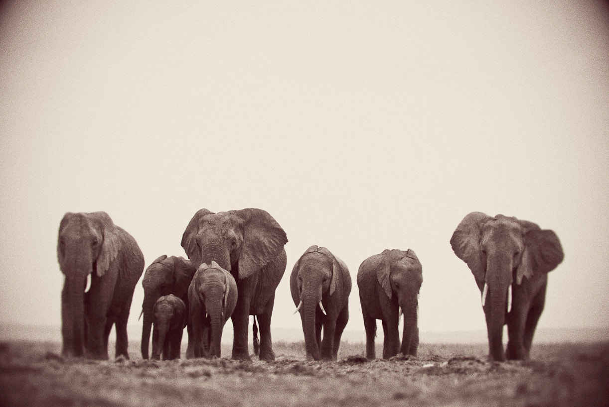 Photograph The family. by Darren Smith on 500px
