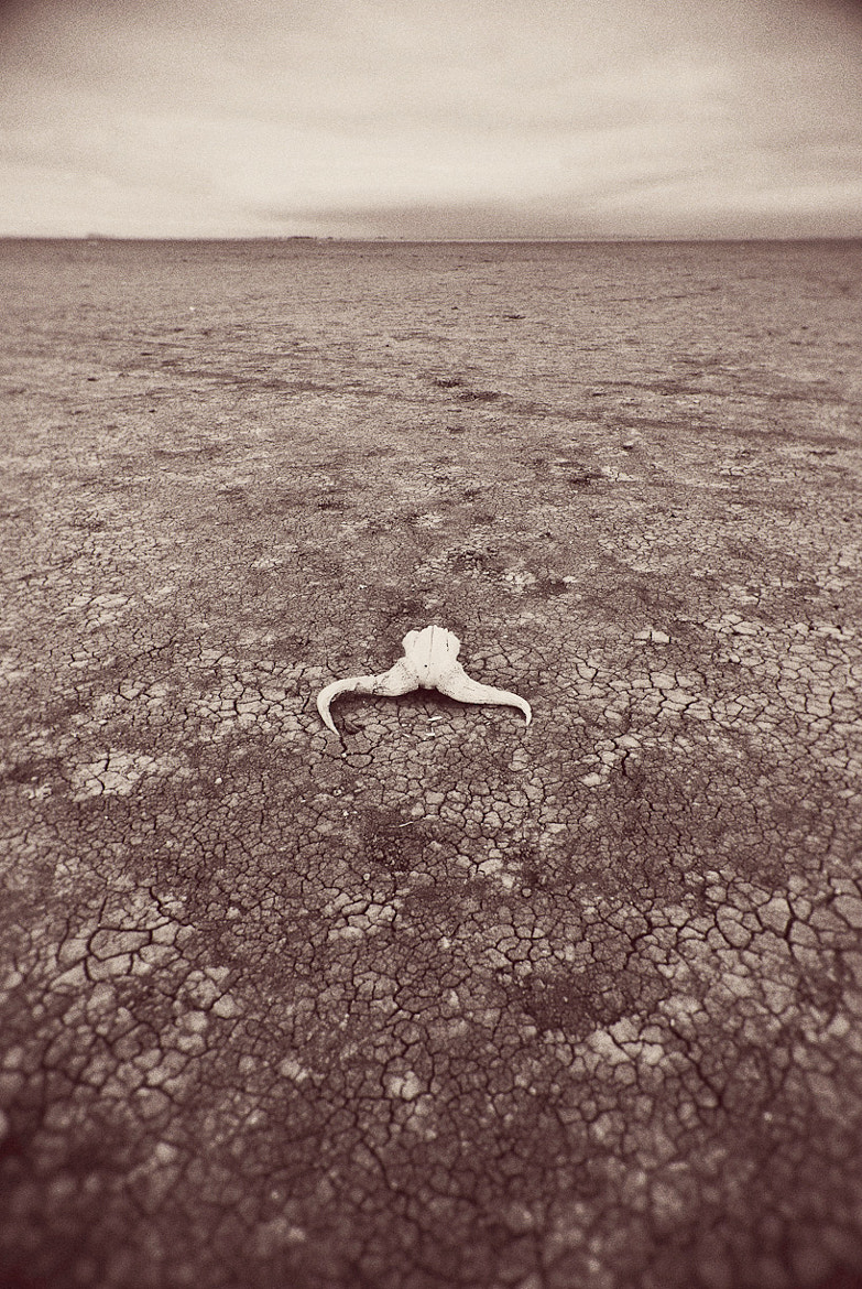 Photograph Skull on the plains III. by Darren Smith on 500px