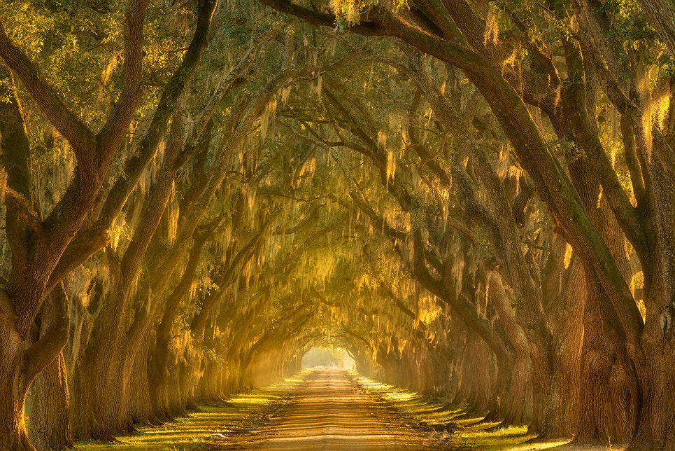 Photograph Illumination Alley by Chris Moore on 500px