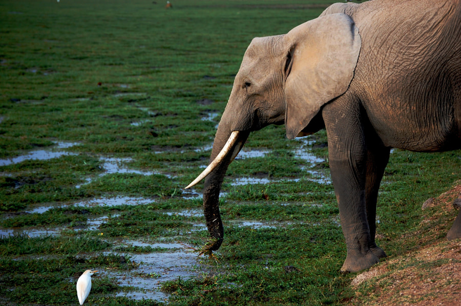 Elephant & the Bird by Jack Gunns on 500px.com