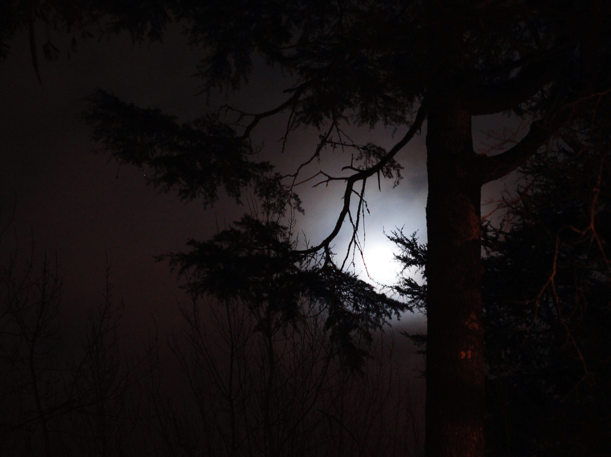 Photograph The moon by Kate  on 500px