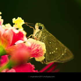 Butterfly by Somkid Manowong (inspiration)) on 500px.com
