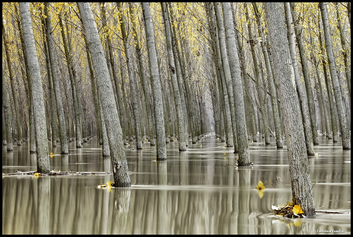 Photograph The whims of the great river by Francesco Favalesi on 500px