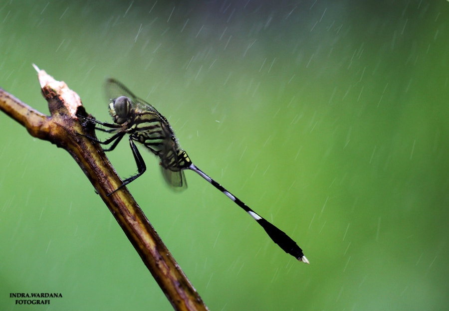 Photograph when it rains by Indra Wardana on 500px