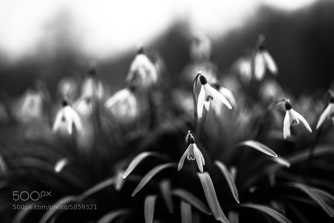 Photograph spring comes :) by rinatus (rinatus) on 500px