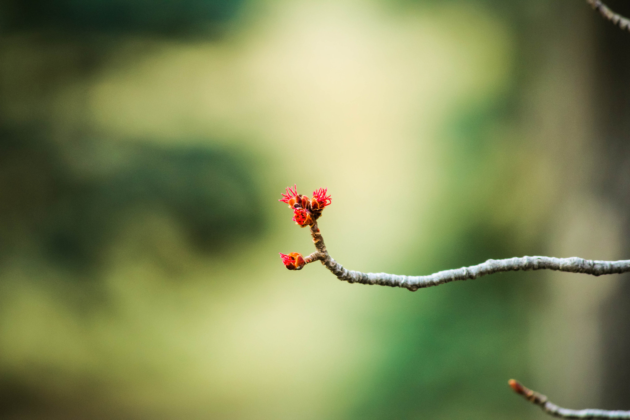 Photograph Budding by Joe Totall on 500px