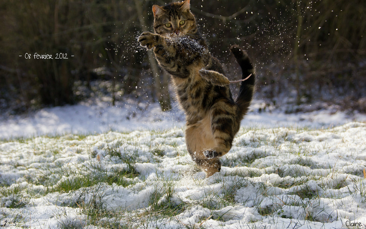 Photograph Kung fu cat by Claire Photographie on 500px