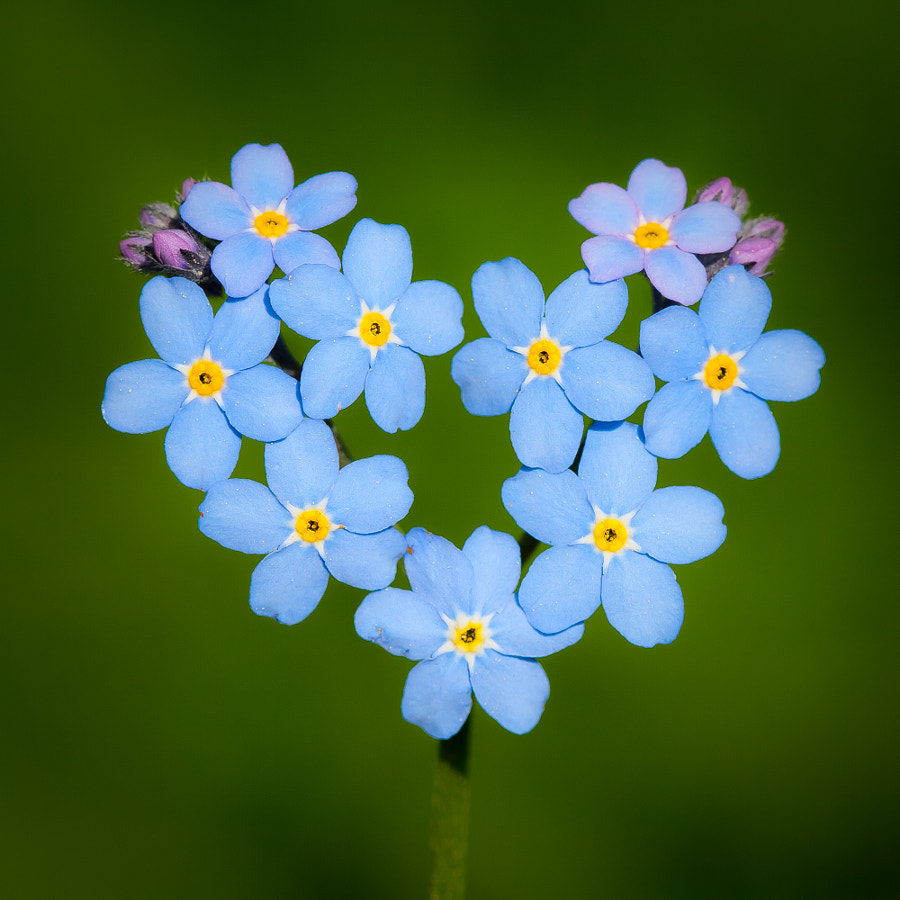 Photograph a blue heart by Øistein Haugsten Holen on 500px