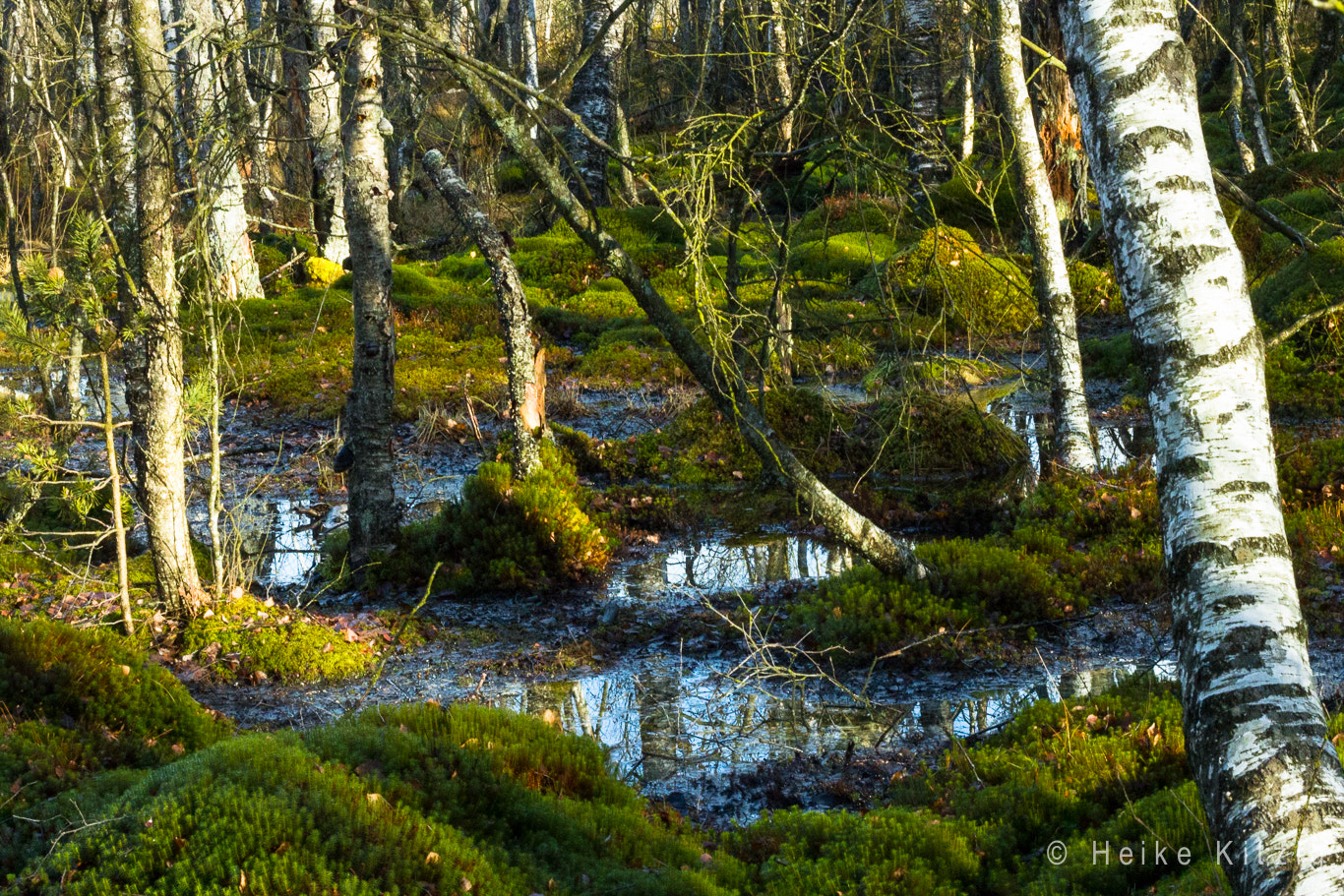 Photograph Moss in Schwenningen Germany 2 by Heike Kitzig on 500px