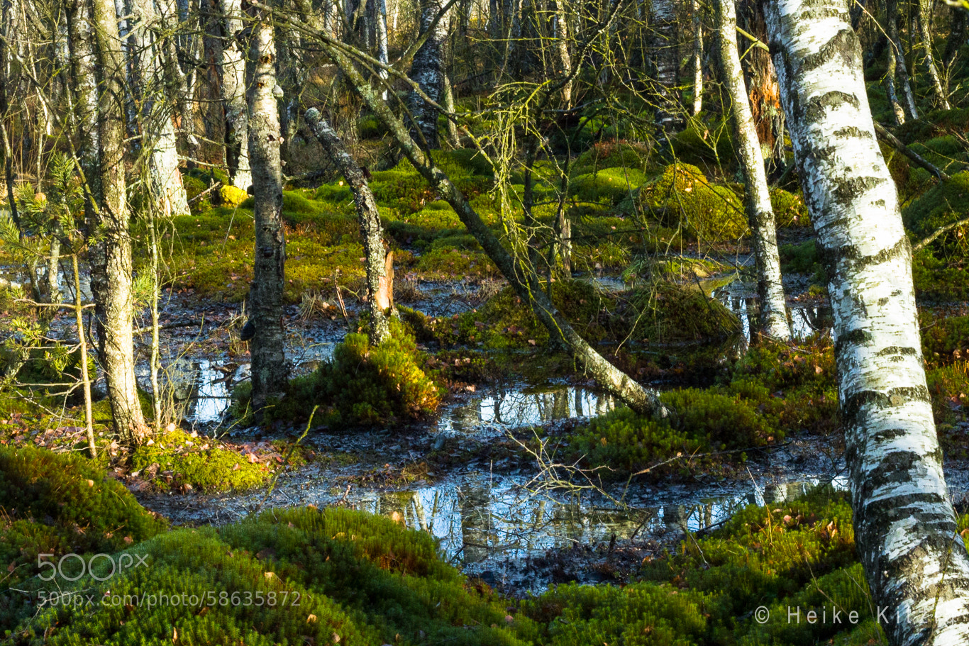 Photograph Moss in Schwenningen Germany 2 by Heike Kitzig on 500px