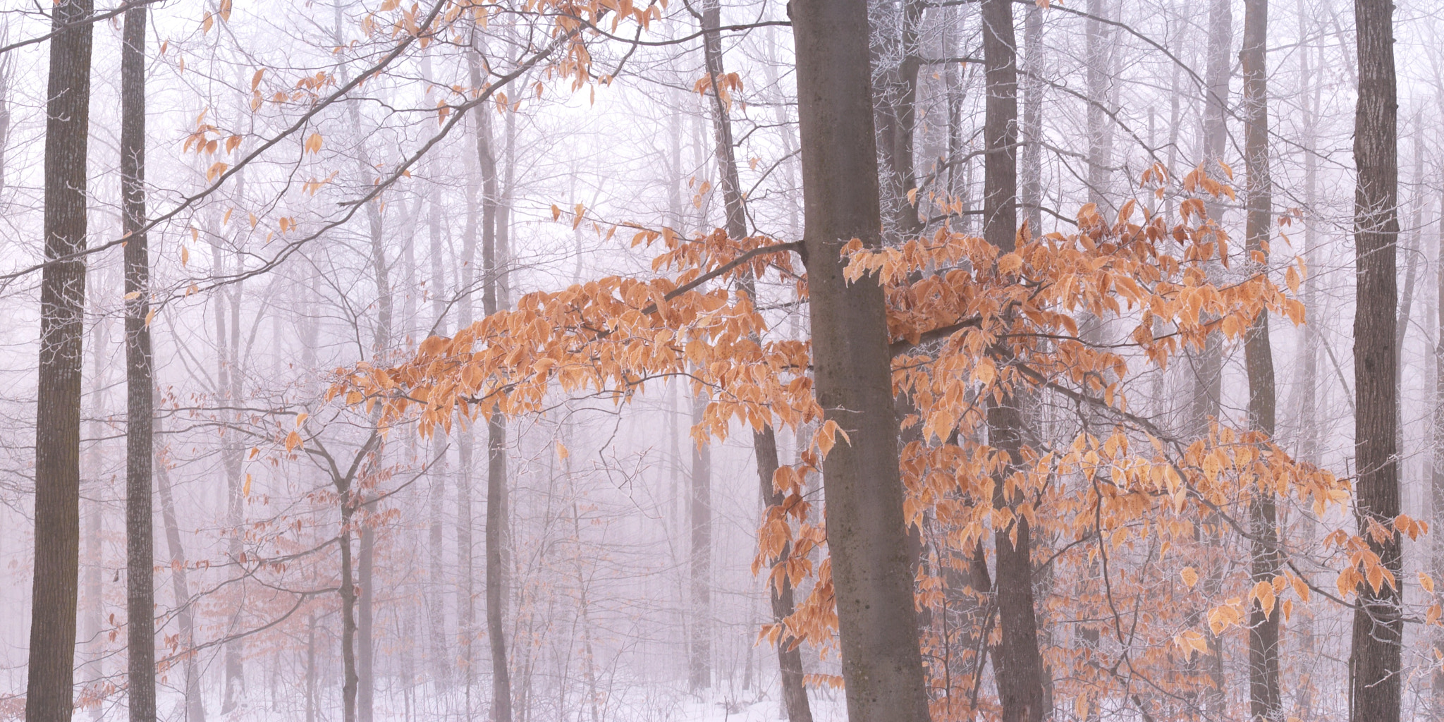 Photograph Winter Fog in the Forest by Robert Williams on 500px