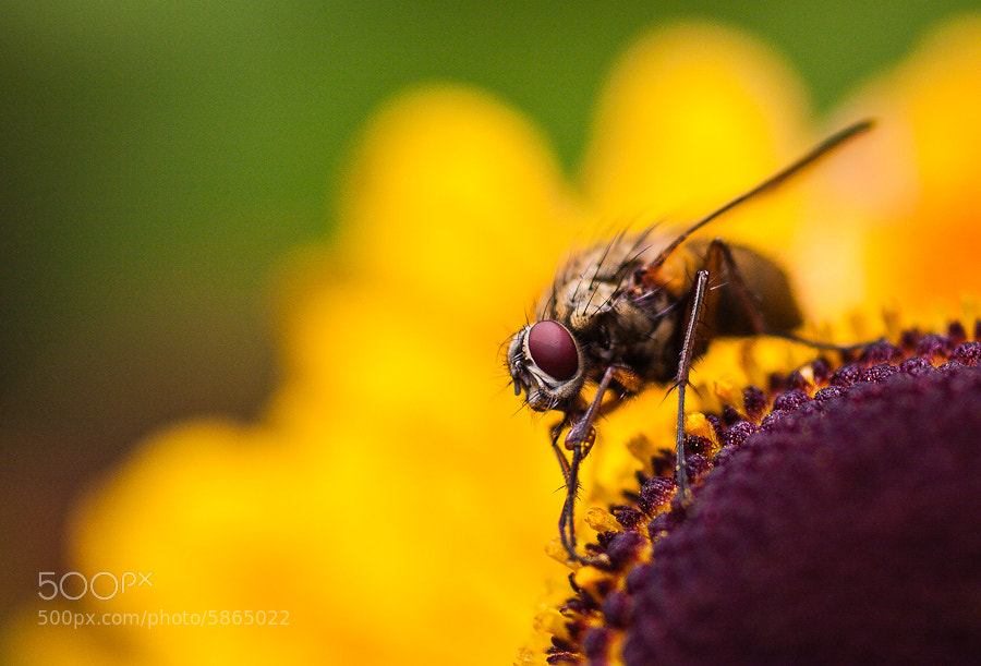 Photograph The Fly by Hans Kruse on 500px