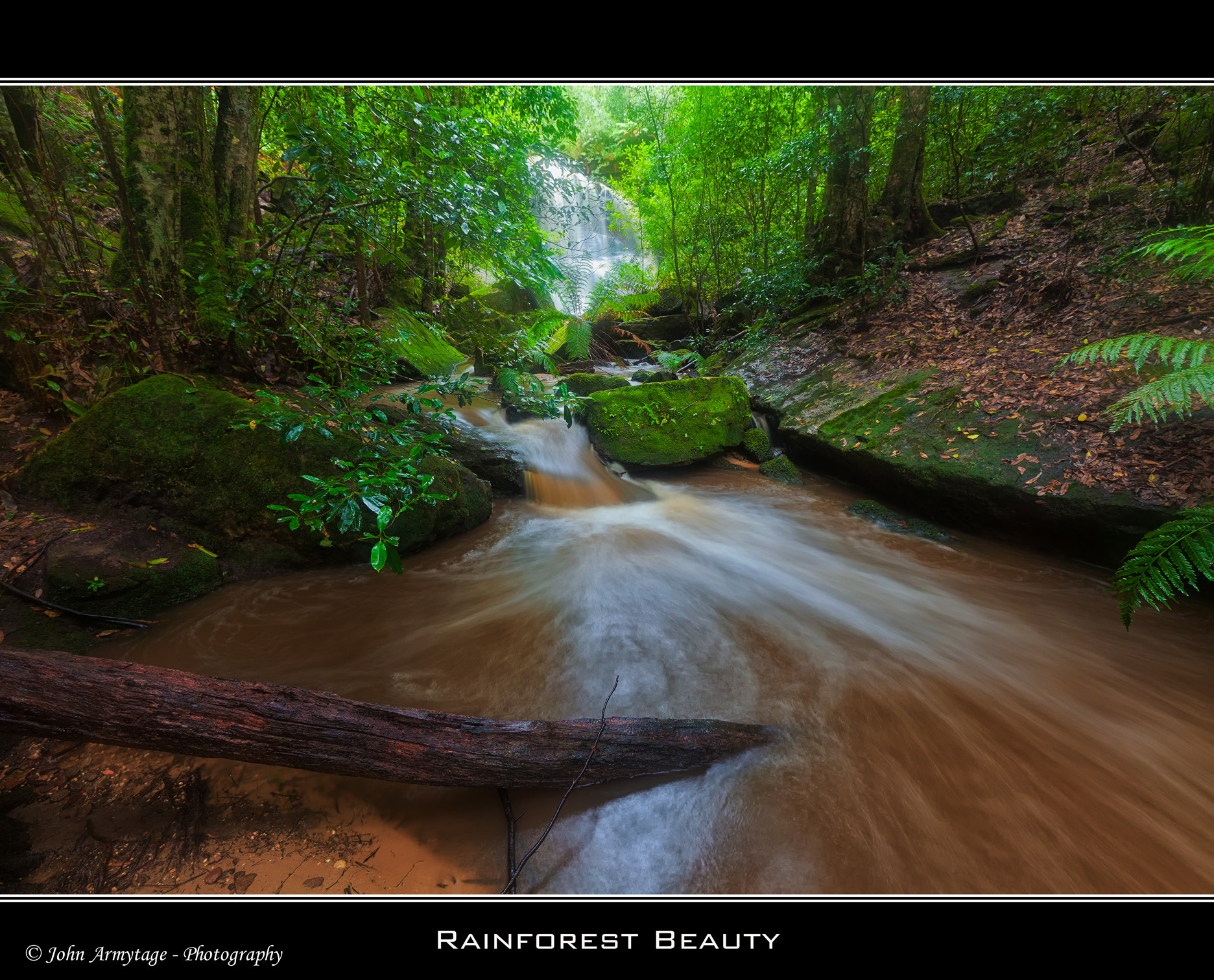 Photograph Rainforest Beauty by John Armytage on 500px