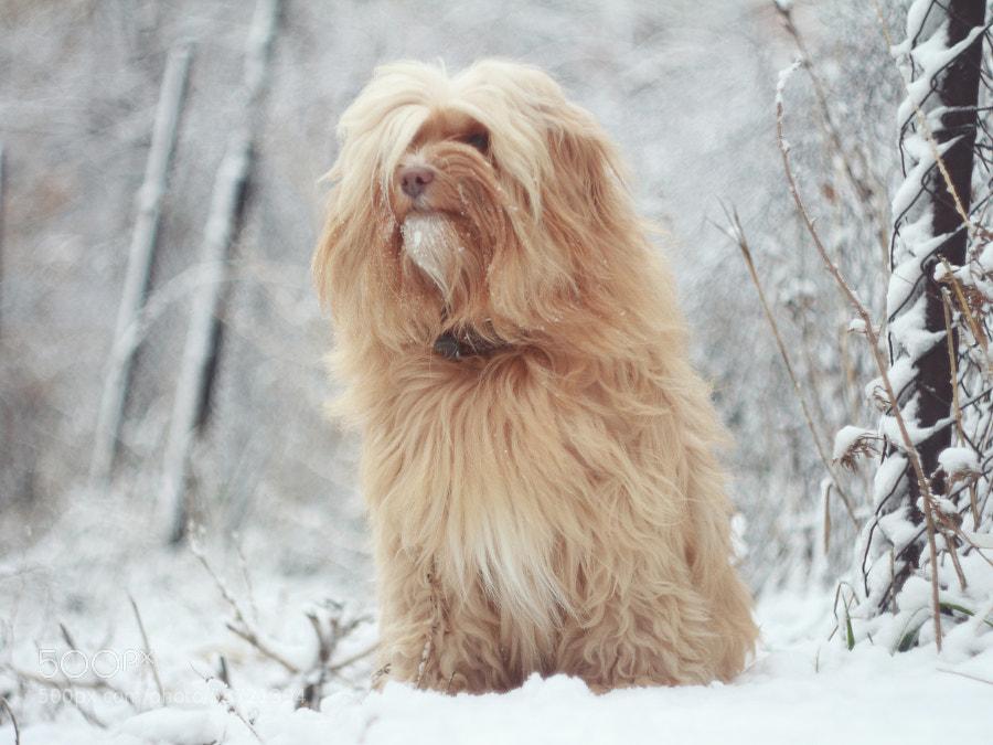 snow...snow..)