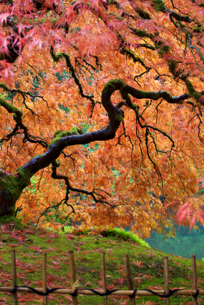 Photograph Japanese Garden by Autumn Brice on 500px