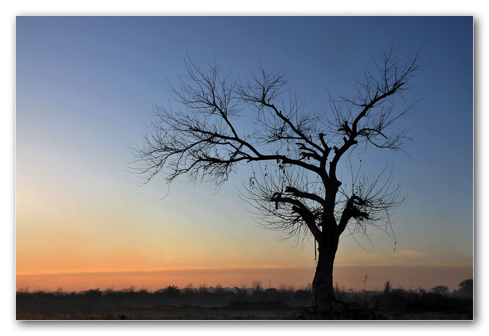 Photograph lone tree by Gurpreet Singh on 500px