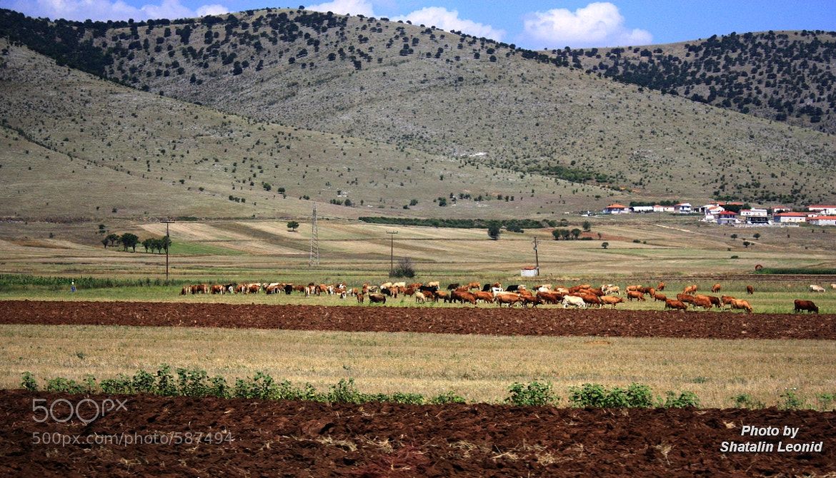 Photograph The Greek landscape by Leonid Shatalin on 500px