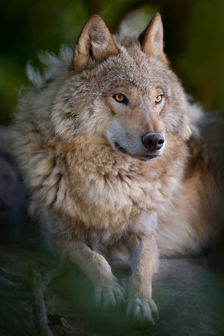 Photograph Chief by andreas richter on 500px