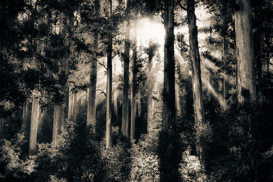 Photograph Light in The Forest by Mario Moreno on 500px