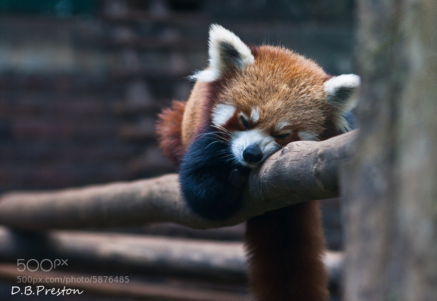 Photograph Napping on the Job  by David Preston on 500px