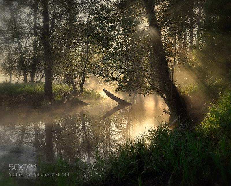 Photograph Magical morning by Sveta & Vasya on 500px