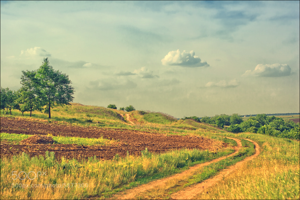 Photograph Field by Insane elf on 500px
