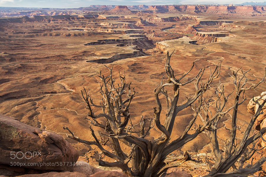 Photograph Barren by Stacy White on 500px