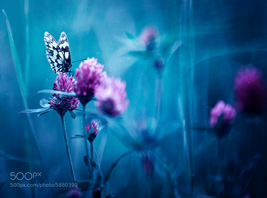 Photograph In blue by Andrea Jancova on 500px