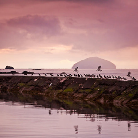 Ailsa Craig and oystercatchers