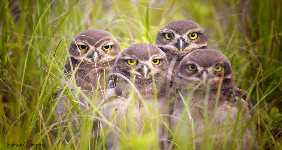 Photograph siblings! by Itamar Campos on 500px