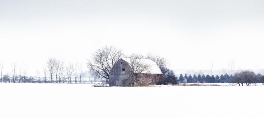 Snowy Serenity