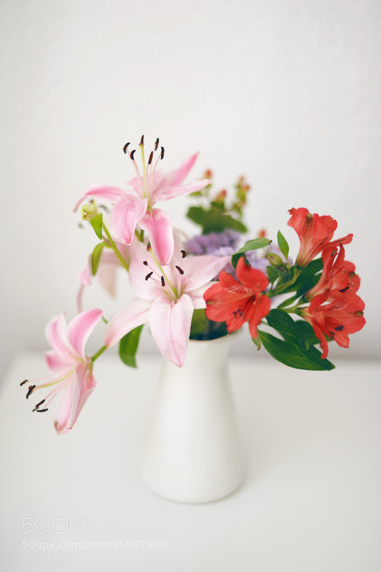 Photograph Pink lilies by Anna Nahabed on 500px