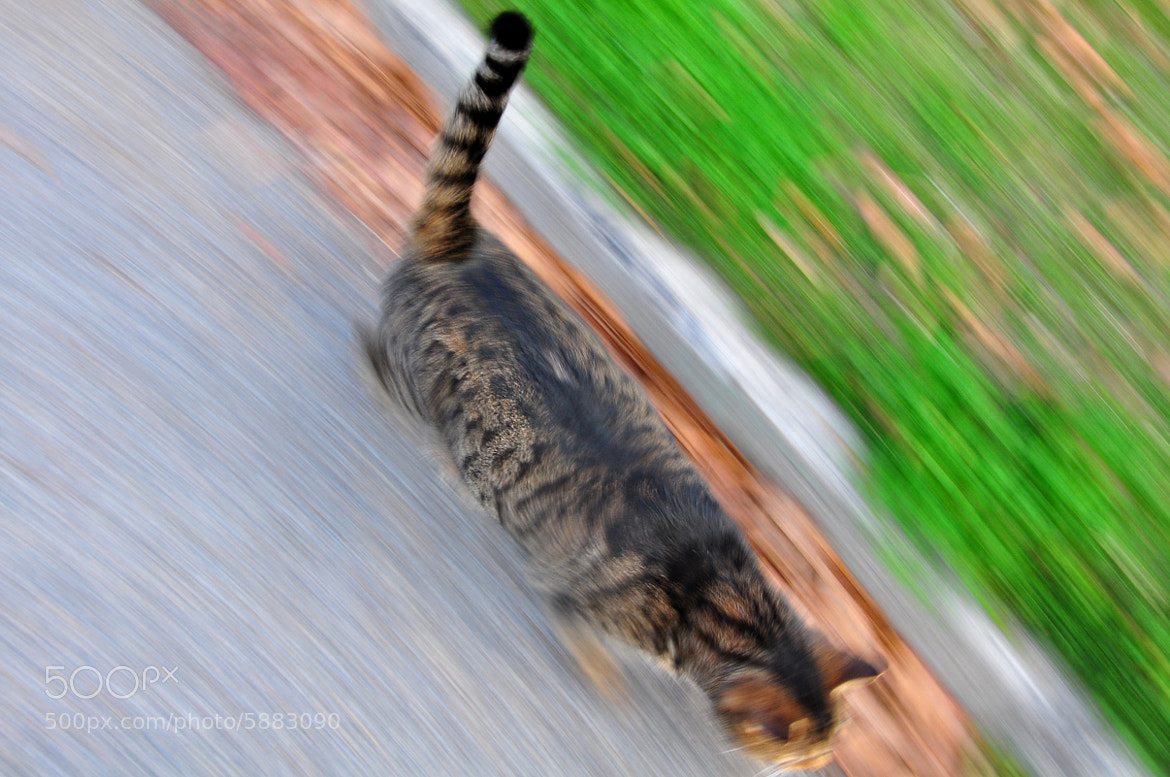 Photograph cat speed by Emile le Roux on 500px