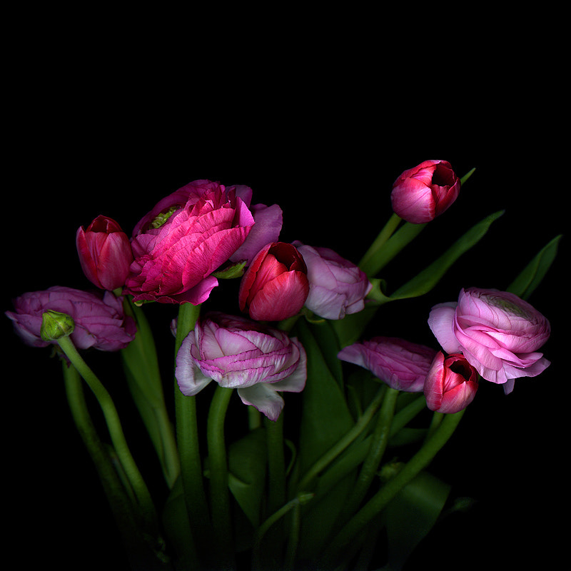 Photograph  A HAPPY MOTHER'S DAY... SAY IT WITH FLOWERS! by Magda Indigo on 500px