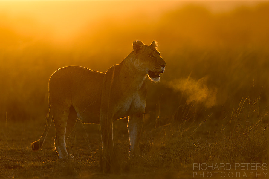 Lions Breath, автор — Richard Peters на 500px.com
