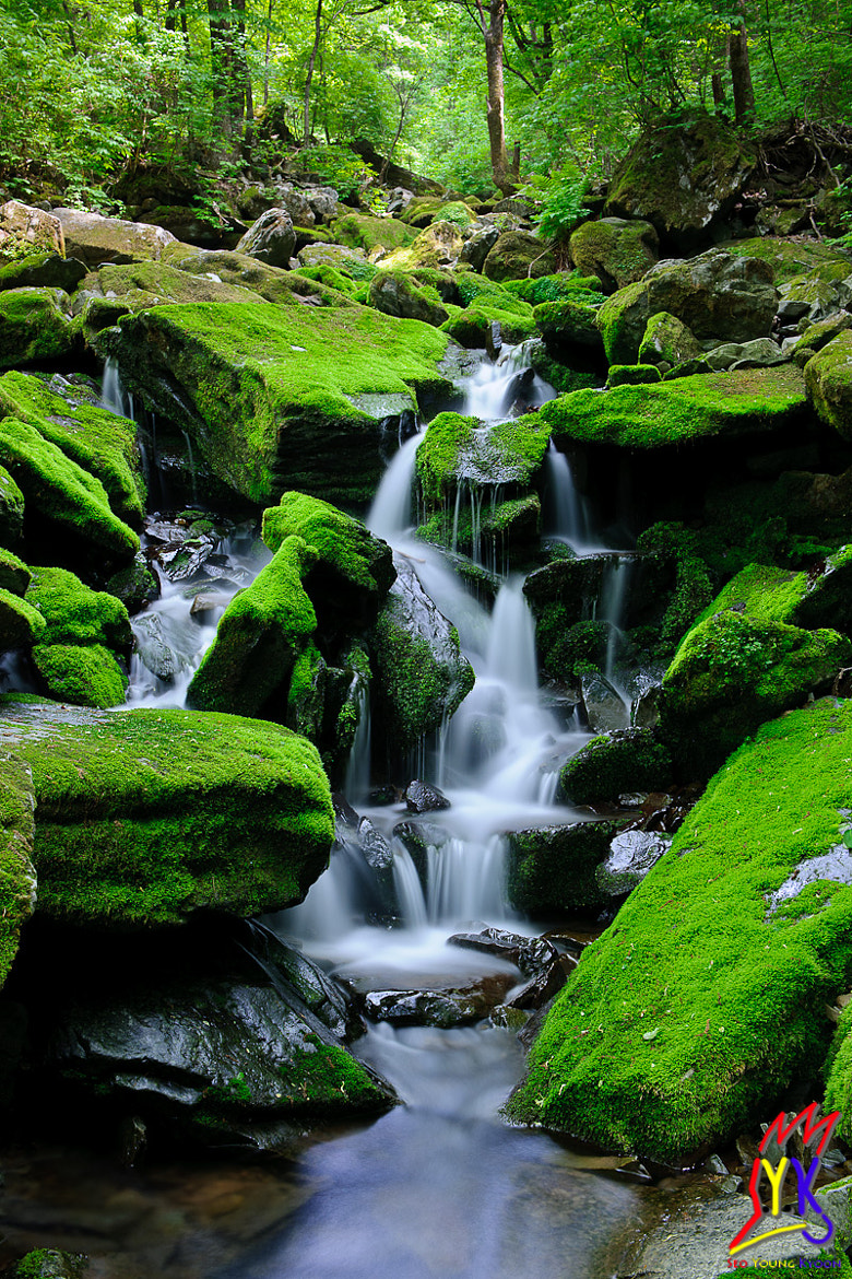 Photograph More than Green by Young Gyoon Seo on 500px