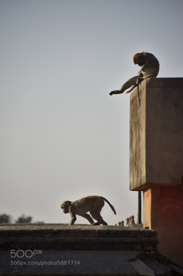 Photograph Monkeys on the blocks by Eric Leblond on 500px