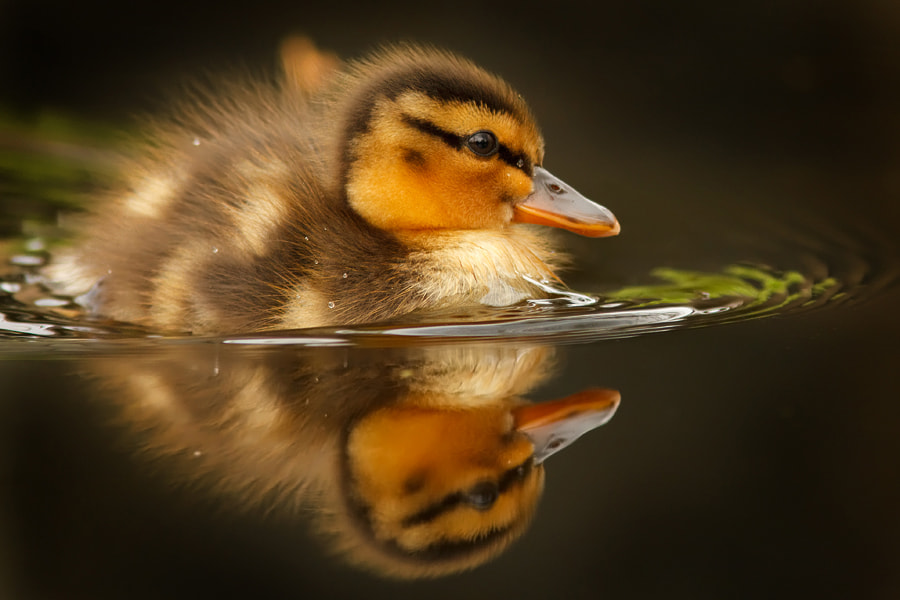 Photograph A New Spring by Roeselien Raimond on 500px