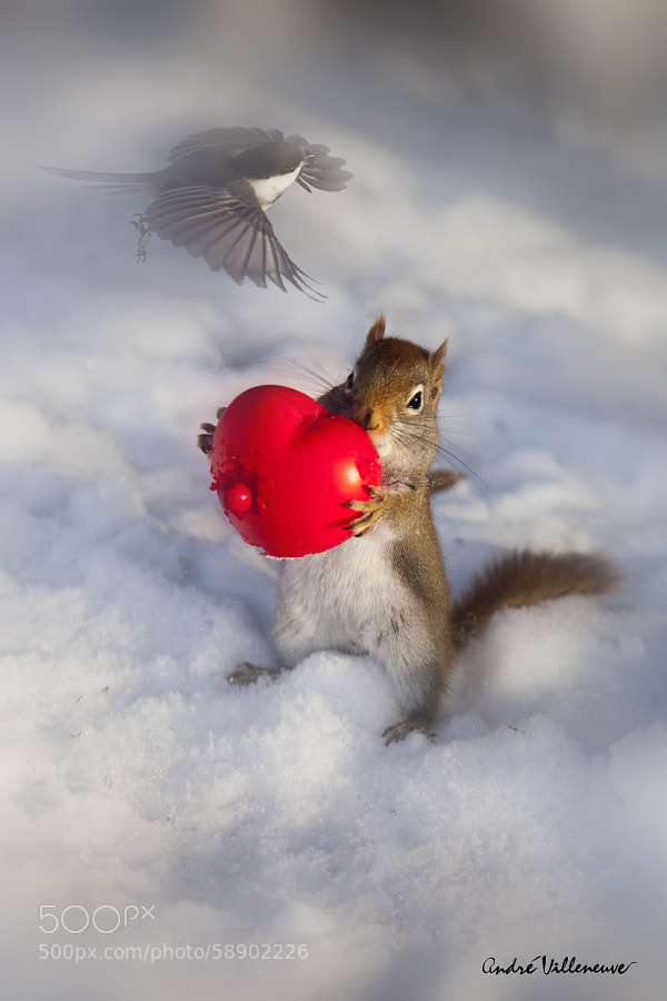 Photograph Red big heart for small bird by Andre Villeneuve on 500px