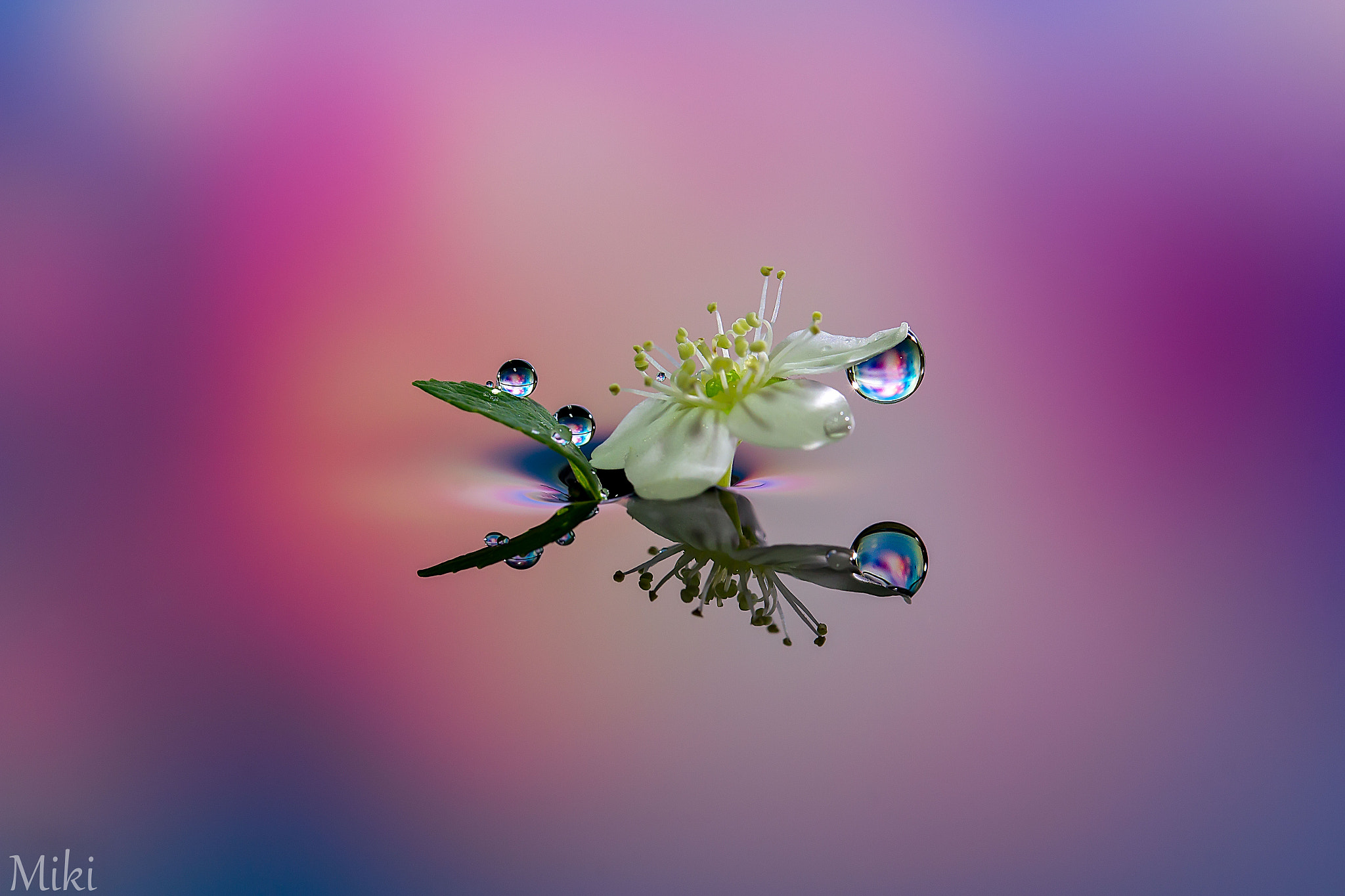 Photograph Dress up flower by Miki Asai on 500px