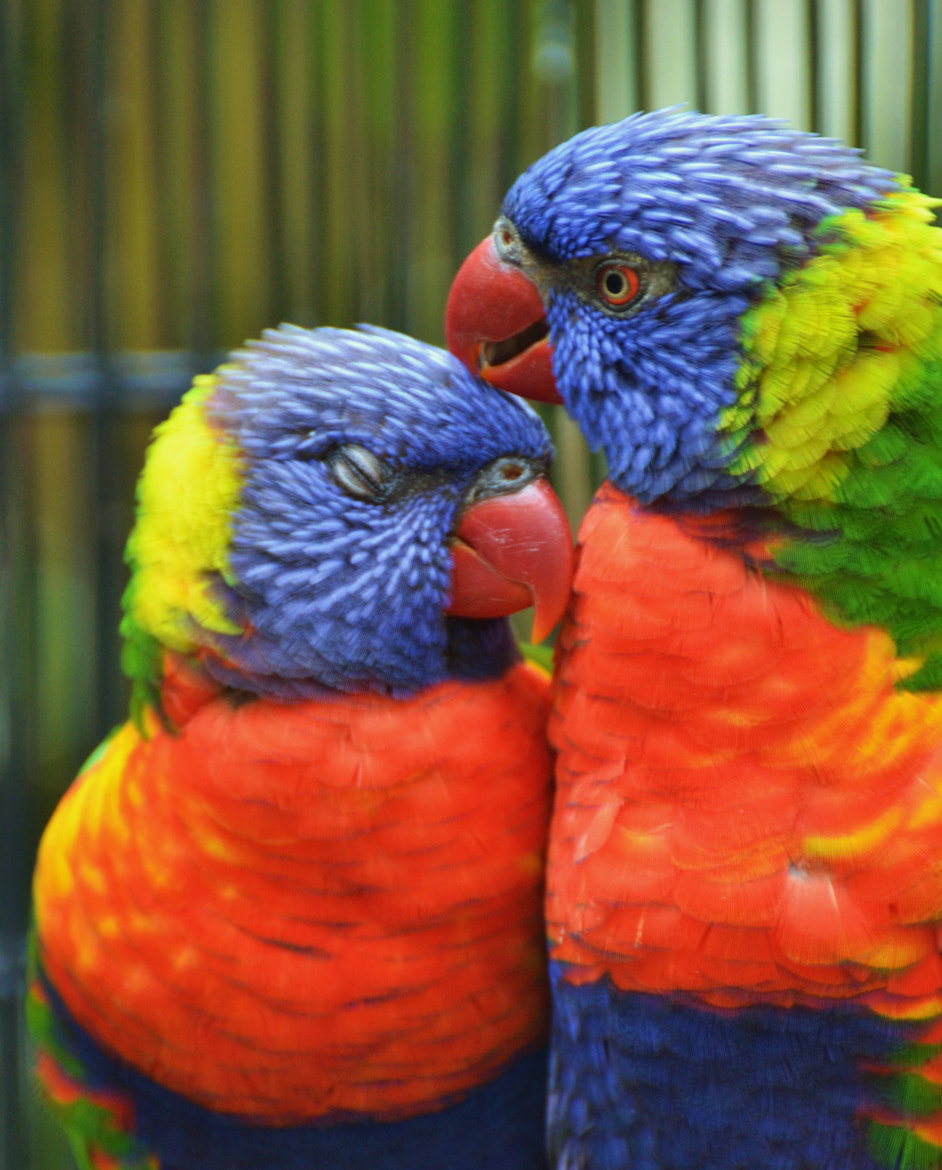Photograph Love Birds II by Michael Fitzsimmons on 500px