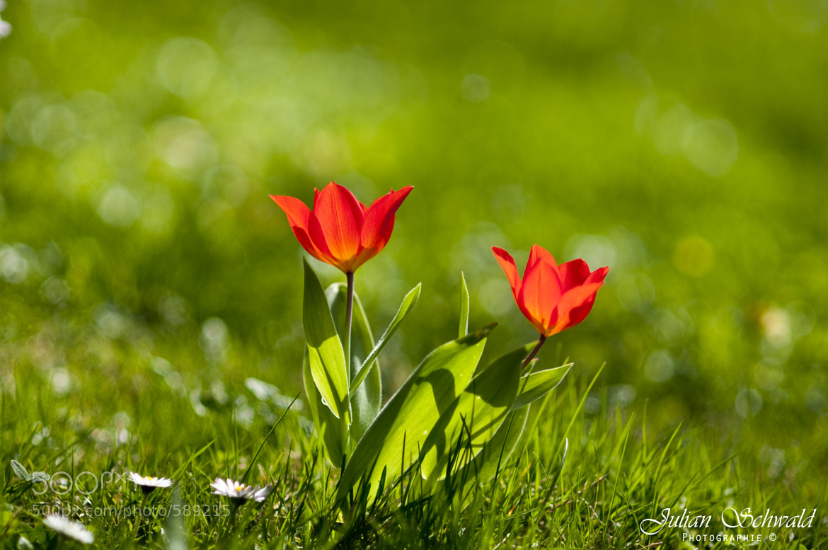 Photograph Red Flowers by Julian Schwald on 500px