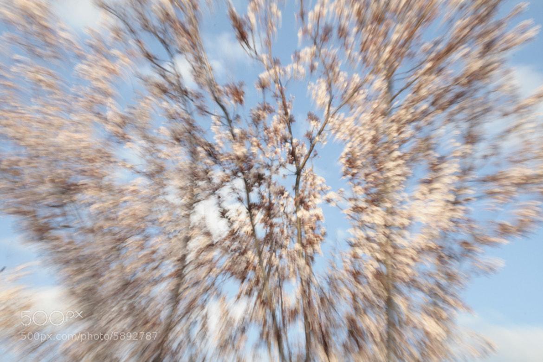 Photograph Zoooming by Geert Van der Straeten on 500px